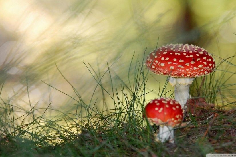 'Shrooms Prove Previous Lives
