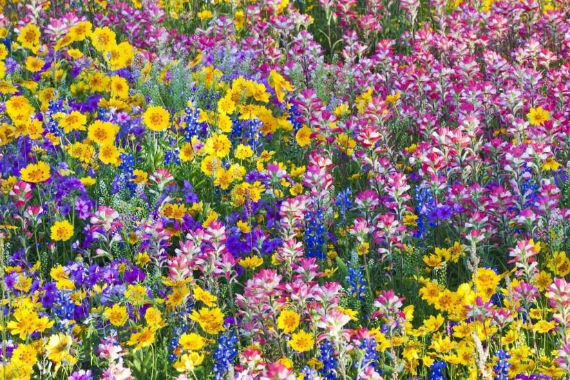 Texas Tag - Multicolor Spring Texas Flowers Wildflowers Bluebells Nature  Wallpapers For Mobile Phone for HD