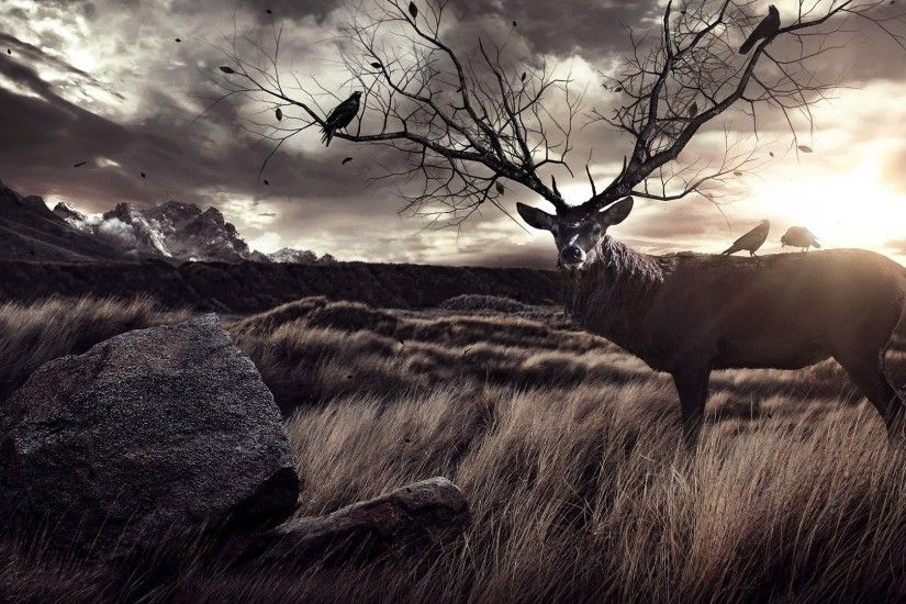 Amazing Elk Wallpaper · Hunting WallpaperDeer ...