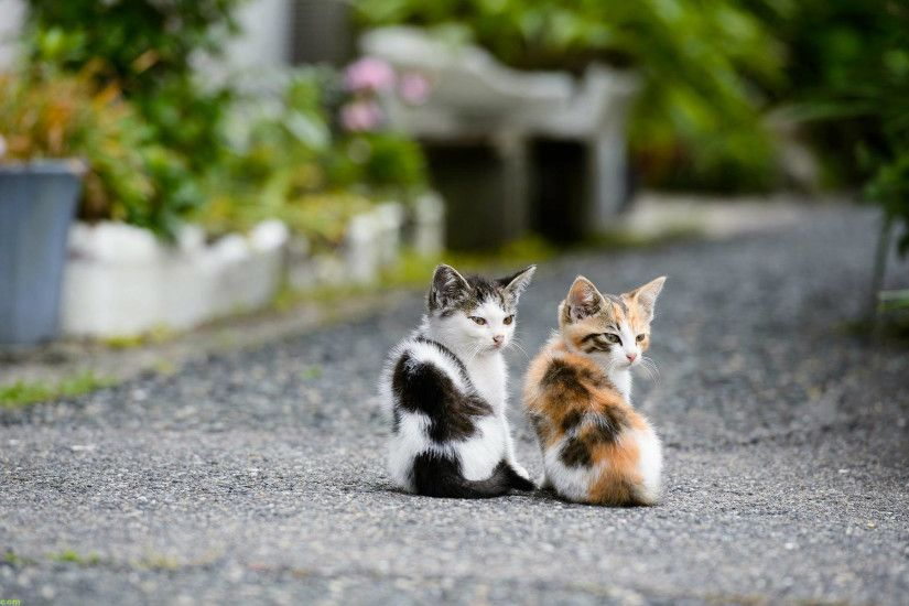 Cute Kittens HD Wallpapers