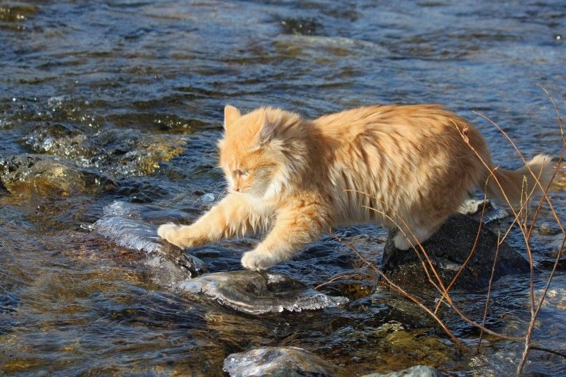 cat red fearless water stones researcher