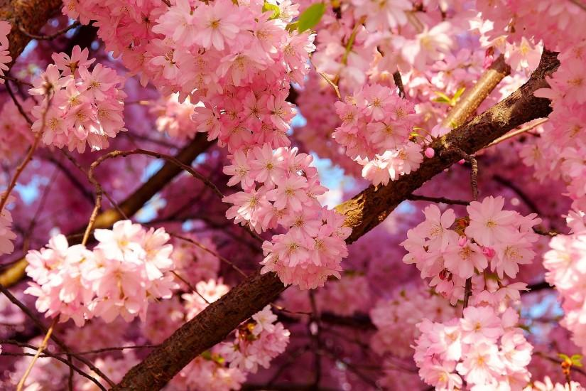 Free 3d Hd Spring Wallpaper