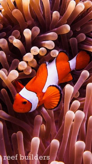 ... iphone6-plus-coral-reef-fish-wallpaper-background-6 ...