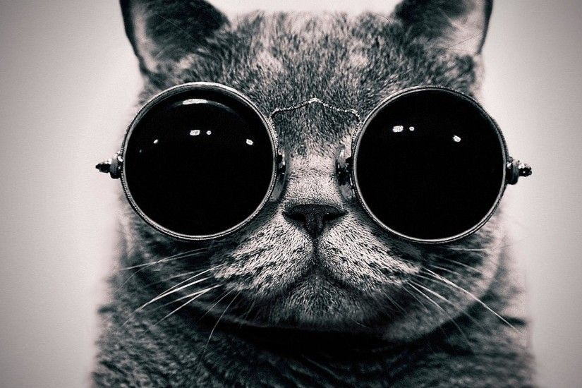 Cat steampunk wallpaper glasses funny wallpapers 1920x1080