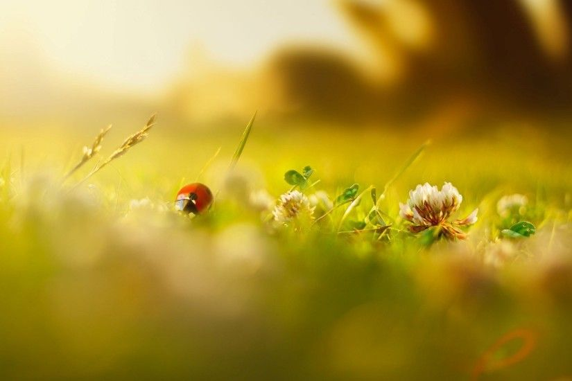 close up green ladybug insects flower flowers grass green blur day morning  summer spring background wallpaper