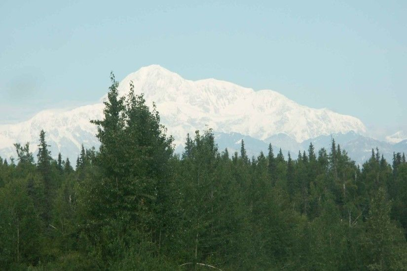 File:Green forest with mountain McKinley in background Denali national  reserve park.jpg
