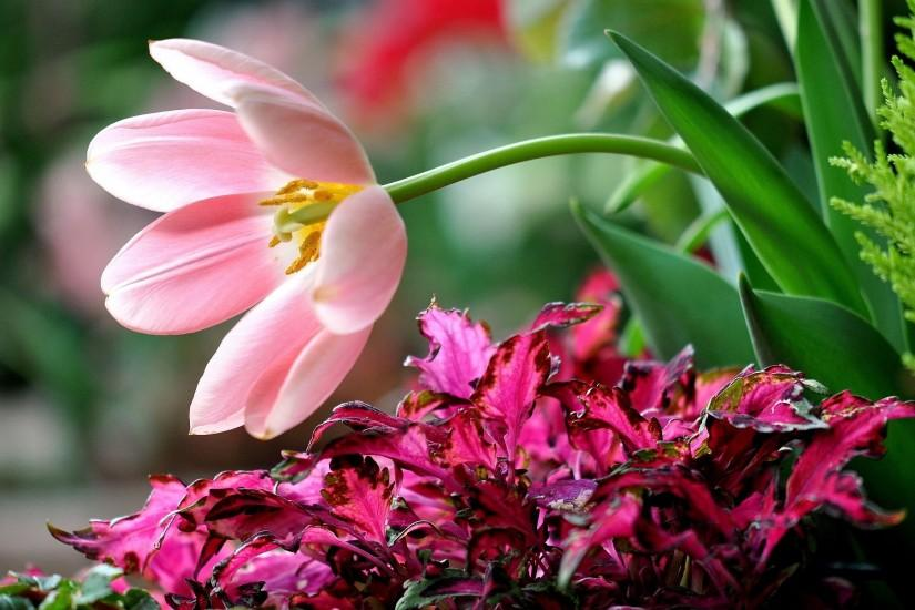 Pink flower background Wallpapers Pictures Photos Images. Â«