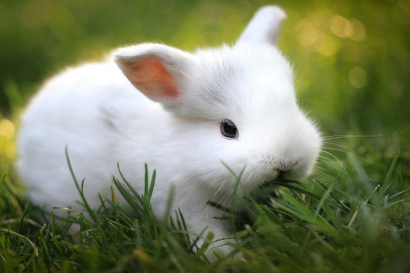 Cute Bunny Wallpapers High Resolution