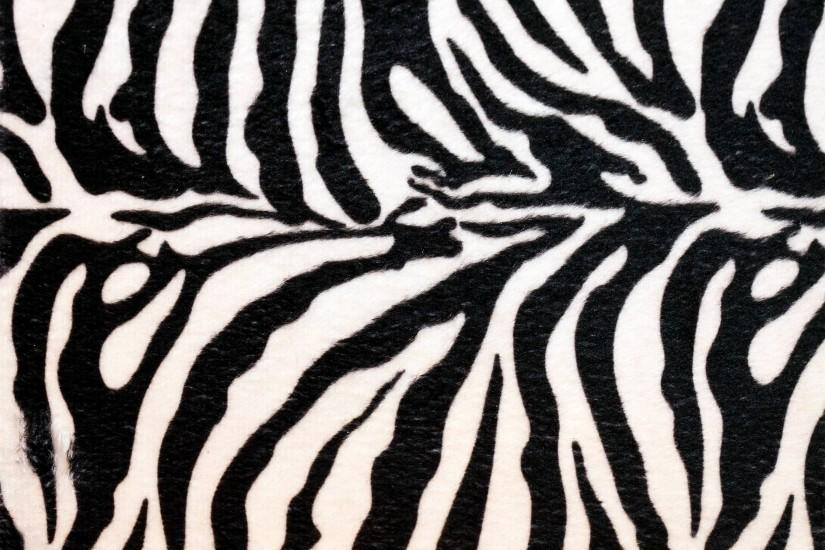 Wallpapers For > Cute Zebra Phone Backgrounds