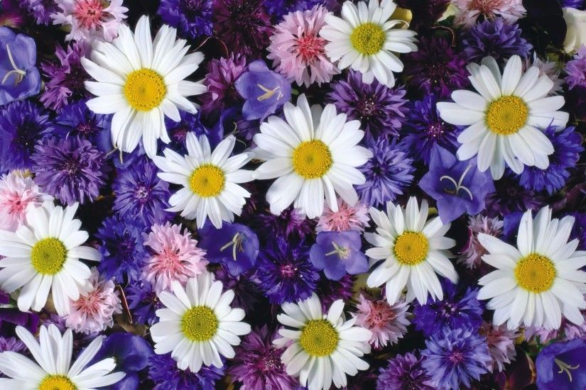 White daisies between the purple flowers wallpaper