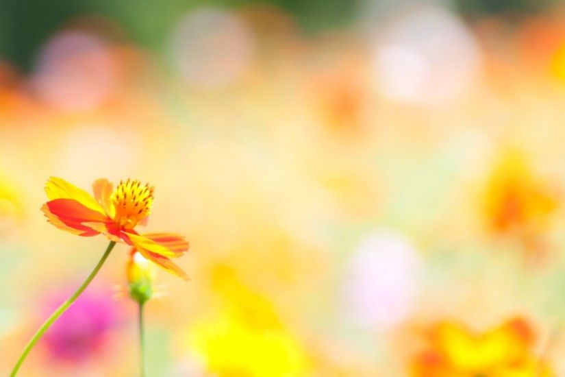 Download Convert View Source. Tagged on : Summer Flowers Wallpaper Cool ...