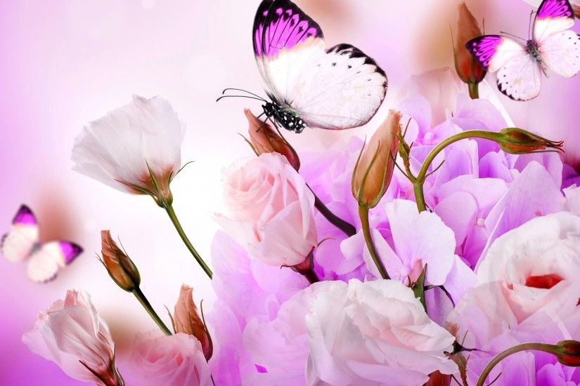 0 Flower Butterfly Wallpaper Pixels Talk Flower With Butterfly Wallpaper HD  Download High Quality