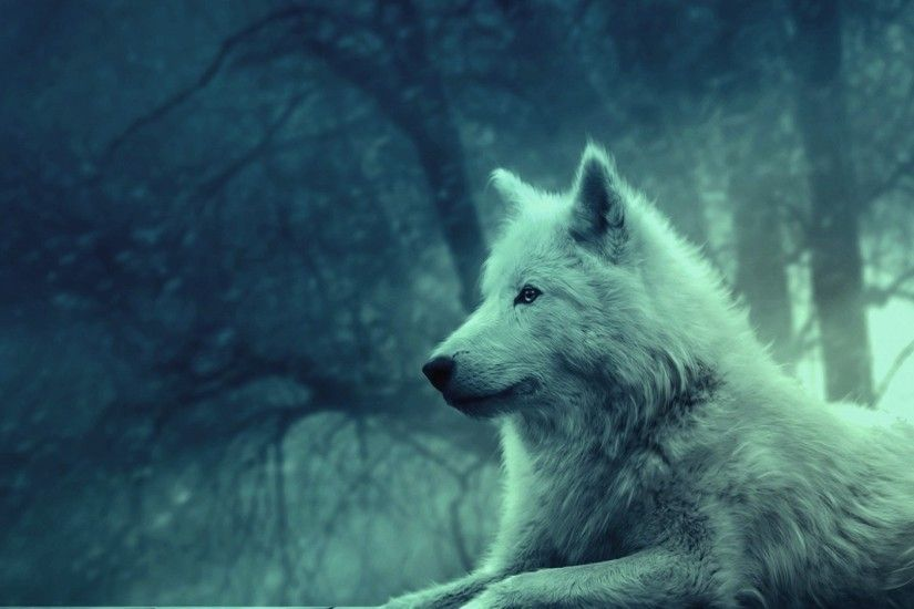 Preview wallpaper wolf, light, forest, wild, calm, peace 1920x1080