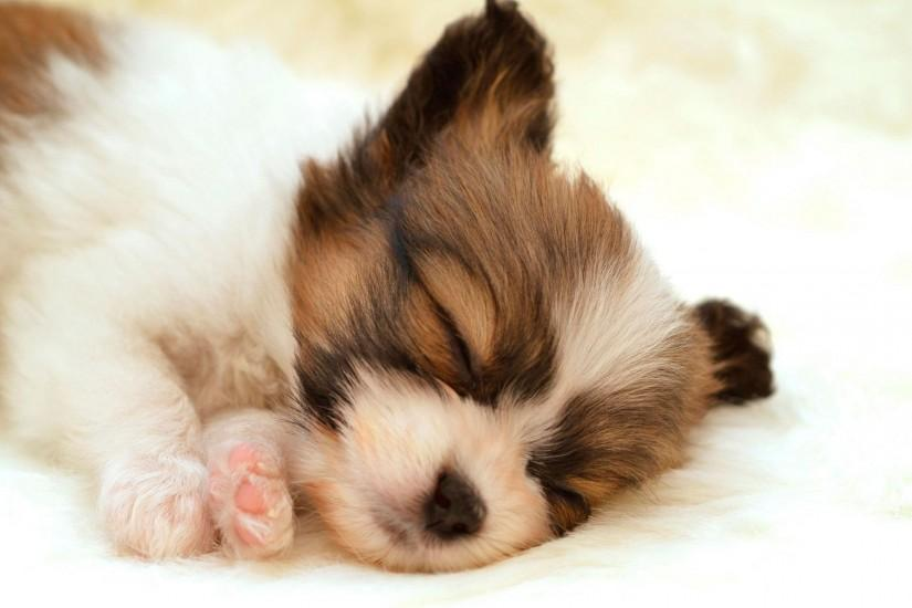 puppy wallpaper 1920x1200 for mobile hd