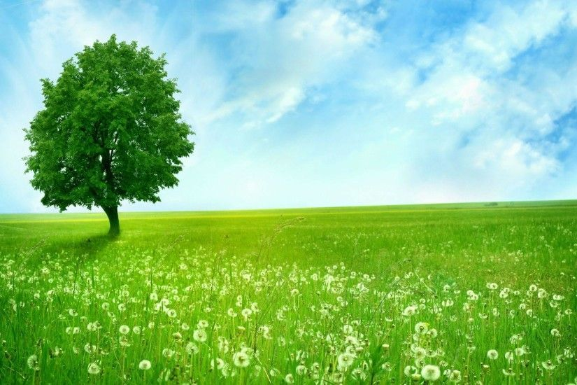 Wallpaper Hd Nature Green Desktop