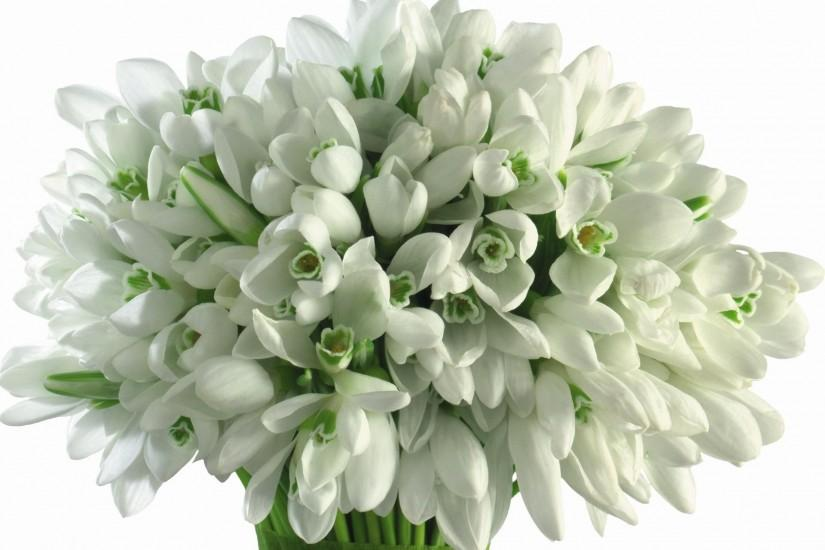 1920x1380 Wallpaper snowdrops, flowers, white background, bouquet, close-up