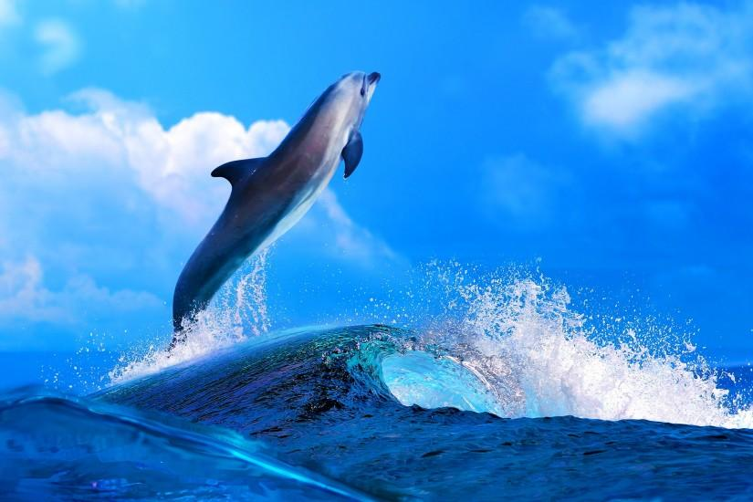 Dolphin Wallpapers Pictures Photos Images. Â«