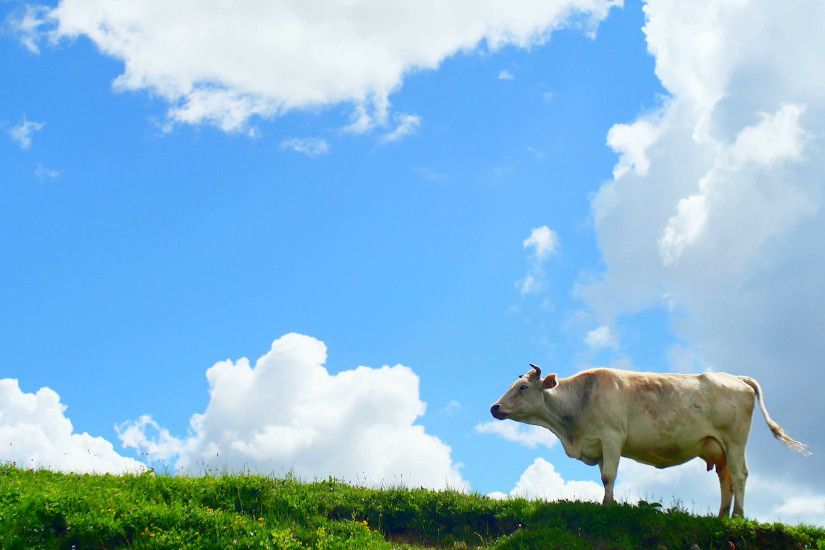 cow grazing on green hill top in mountains on background of beautiful  summer clouds Stock Video Footage - VideoBlocks