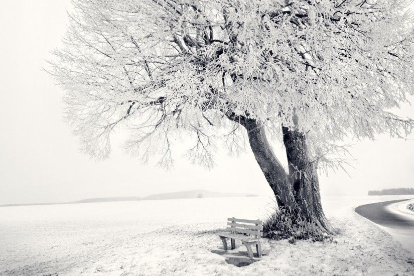 Preview wallpaper winter, snow, bench, tree, frost, track, cover 1920x1080