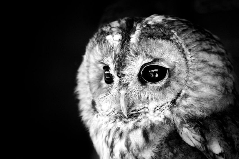 ... Cute owl HD Wallpaper 2560x1600