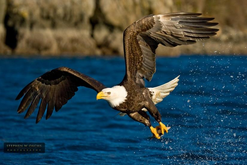 wallpaper fishing eagle beautiful gallery 1920x1200