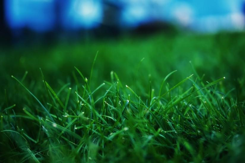 grass wallpaper 2560x1600 for iphone 7
