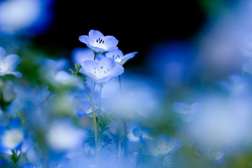 Wonderful Blue Flowers Wallpaper