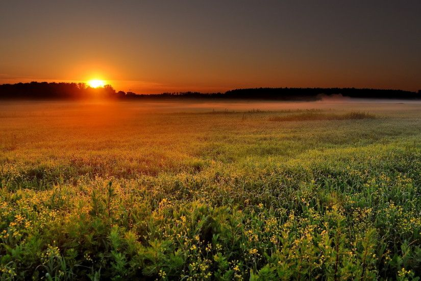 A very pretty sunrise or sunset from a flowering field with fog rising in  the back