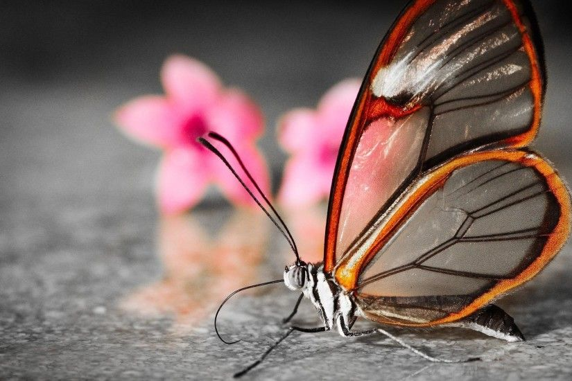 Best images about butterflies on Pinterest Desktop 1920×1200