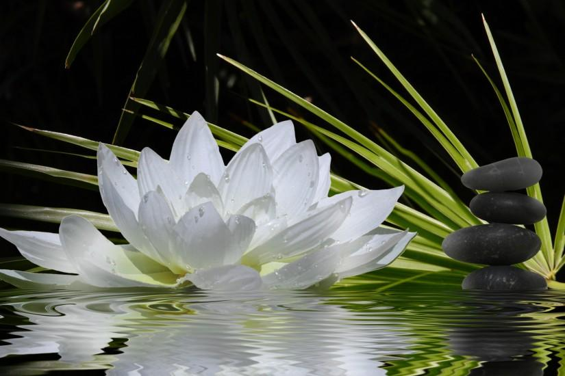 most popular zen wallpaper 2560x1600