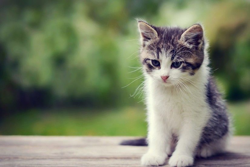 Kitten Wallpapers Wide