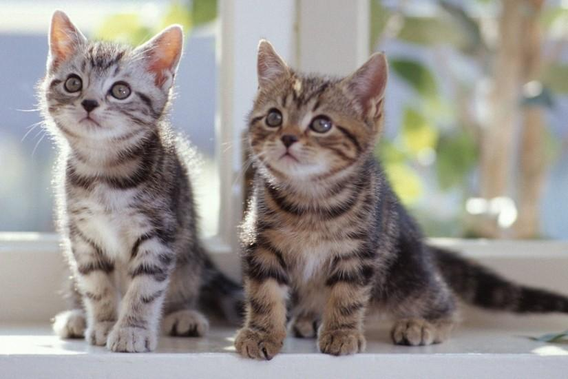 Two Cute Cats Wallpaper