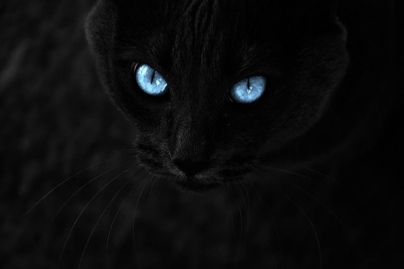 Black Cat With Blue Eyes 871579 ...