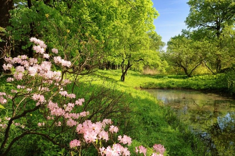 Preview wallpaper spring, branches, colors, wood, trees, pond, water,