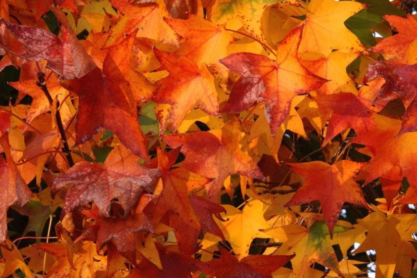 Fall colors wallpapers download.