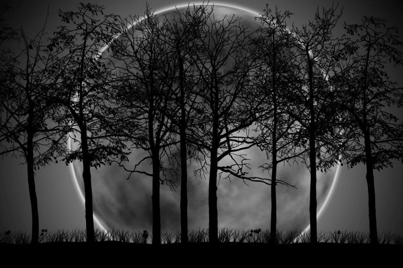 new dark forest background 2560x1600 photo