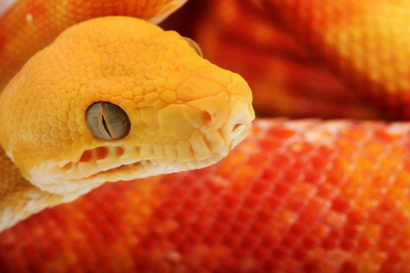 Cool Snake Wallpaper 29862