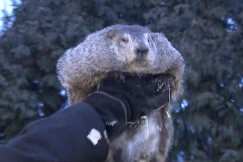 Groundhog Day: Punxsutawney Phil predicts 6 more weeks of winter - NBC News