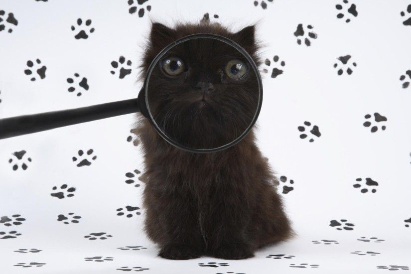 Cat Behind Magnifying Glass Desktop Background. Download 1920x1200 ...