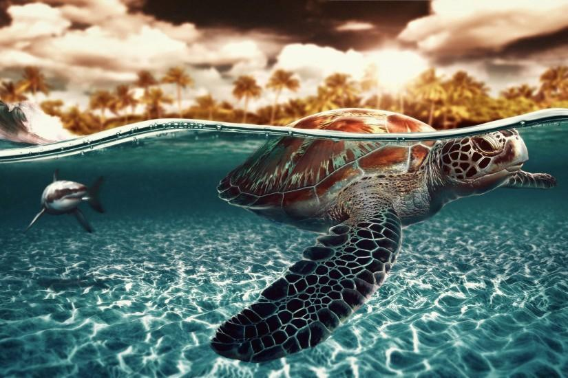 Wallpapers For > Nemo Sea Turtle Wallpaper