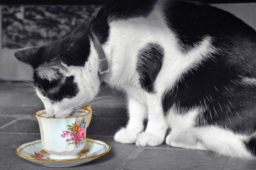 Cute Wallpapers Cat Picture Of Black White Cat Wallpaper Drinking From The  Cup