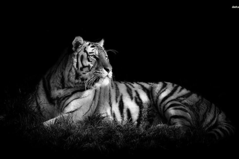 White Tiger HD Widescreen Wallpapers