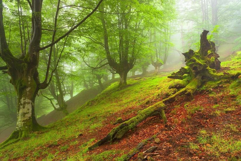 Forest hd Wallpapers Pictures Photos Images. Â«
