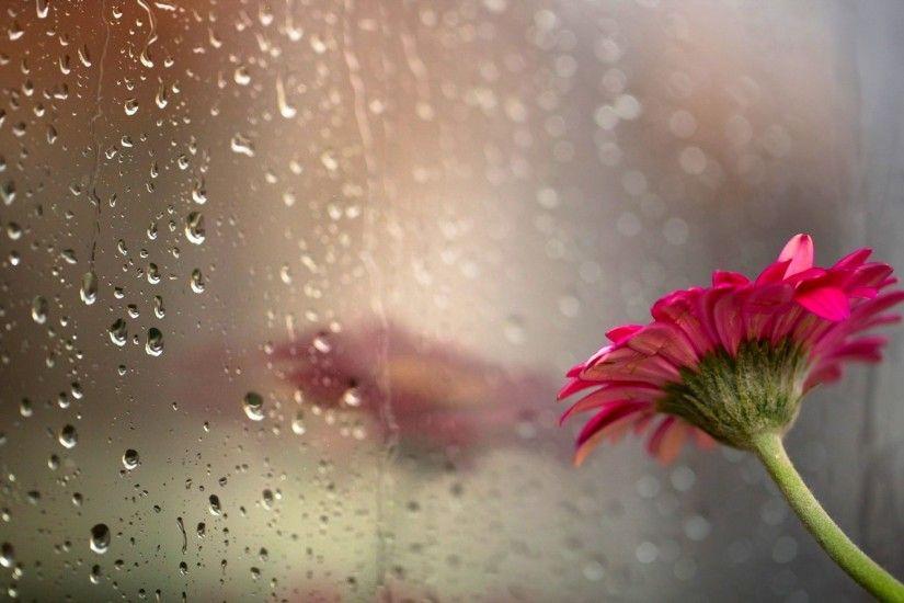 Цветы весенние капли