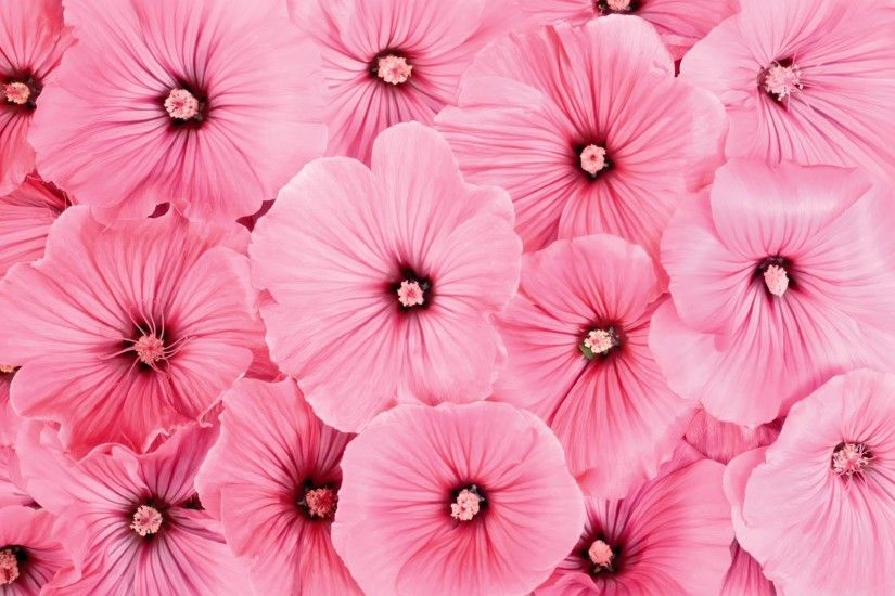 wallpaper.wiki-Pink-Flowers-Wallpaper-PIC-WPD001287