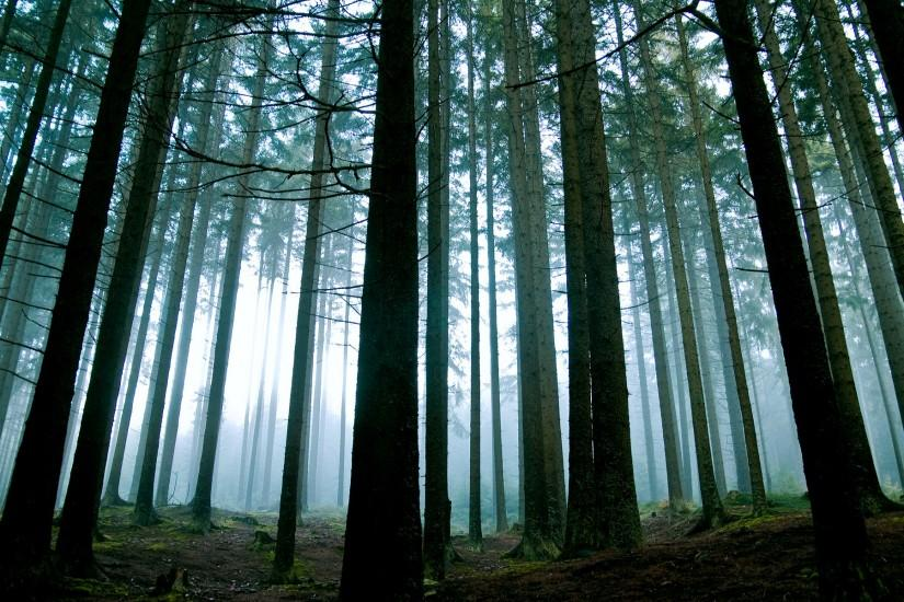 download free forest background 1920x1200 for mac
