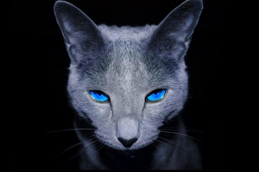 Black-animal-wallpaper-with-dark-gray-cat-with-blue-eyes.jpg