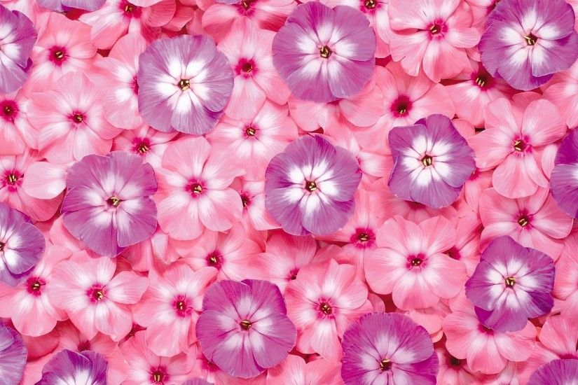 Pretty Pink Backgrounds - Wallpaper Cave Free Pink Flower Wallpapers Hd  Resolution Â« Long Wallpapers ...