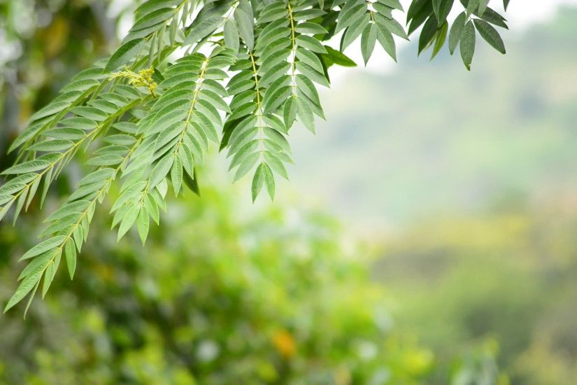 Nature background. Beautiful summer green leaves swinging over trees out of  focus Stock Video Footage - VideoBlocks
