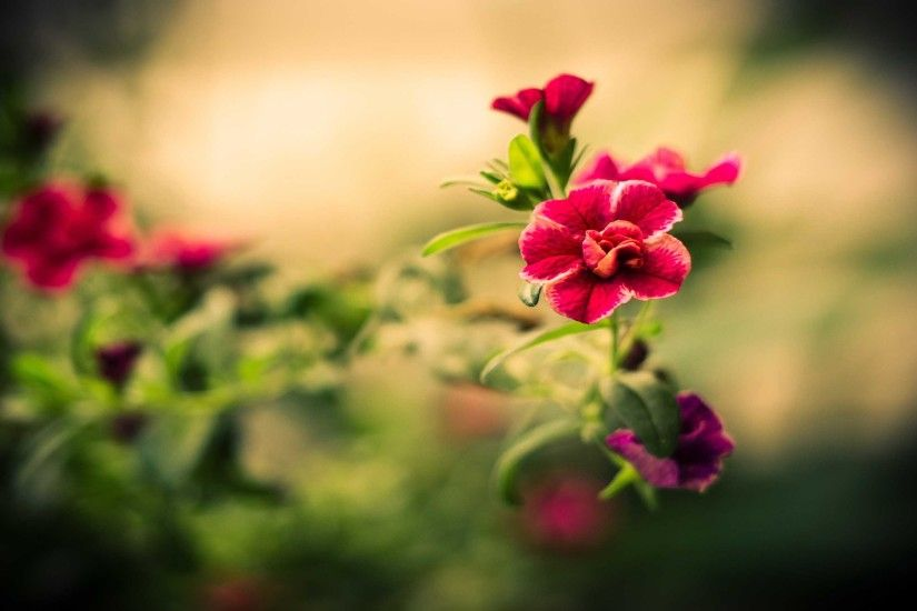 Photography Red Flowers Macro Elegant Wallpaper 2880x1800